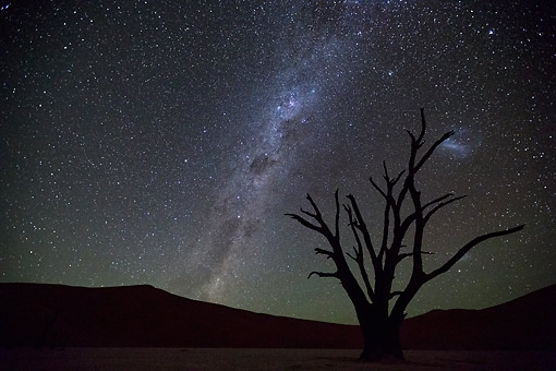 LAN 01 MH0158 01 © Kimball Stock Milky Way Over Dead Acacia Tree In Dead Vlei Salt And Clay Pan, Sossusvlei, Namibia