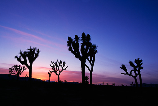 LAN 03 RF0004 01 © Kimball Stock Joshua Tree National Park At Sunset California