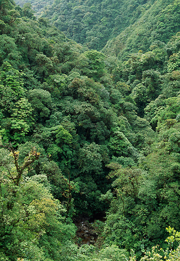 LAN 04 LS0001 01 © Kimball Stock Aerial View Of Rainforest In Costa Rica