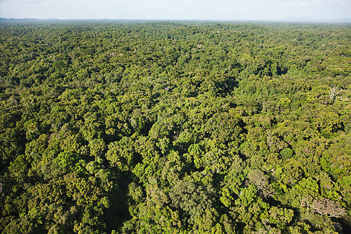 LAN 04 MH0014 01 © Kimball Stock Aerial View Of Humid Montane Forest On Slopes Of Tepuis
