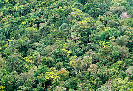 LAN 04 MH0028 01 © Kimball Stock Aerial View Of Rainforest Canopy In Amazon Basin