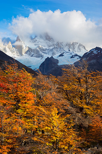 LAN 04 MH0039 01 © Kimball Stock Autumn Trees By Cerro Torre Mountains In Patagonia