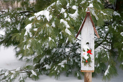 LAN 07 DA0003 01 © Kimball Stock Bird Nest Box With Holiday Decorations In Winter Illinois