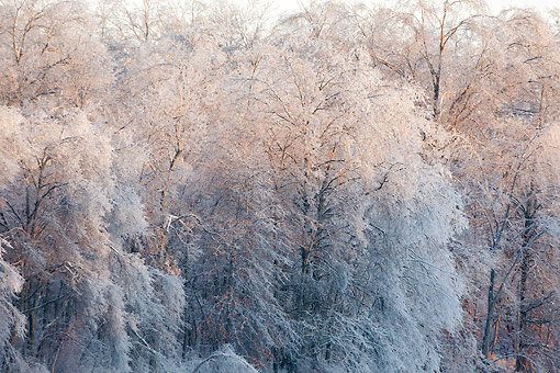 LAN 07 DA0008 01 © Kimball Stock Ice-Covered Trees Near Lake In Marion County, Illinois