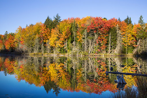 LAN 07 DA0015 01 © Kimball Stock Pond Surrounded By Autumn Foliage In Alger County, Michigan