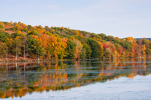 LAN 07 DS0010 01 © Kimball Stock Fall Foliage At Tamarack Lake In Millbrook, New York