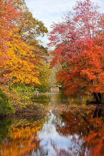 LAN 07 DS0012 01 © Kimball Stock Fall Foliage At Wassaic Creek In Millbrook, New York