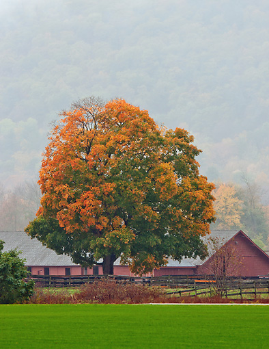 LAN 07 DS0015 01 © Kimball Stock Red Barn In Fog By Fall Foliage In Millbrook, New York