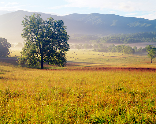 LAN 07 GR0015 01 © Kimball Stock Cades Cove In Early Summer Morning Great Smoky Mountains National Park, Tennessee