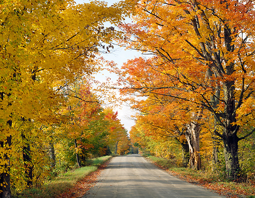 LAN 07 GR0030 01 © Kimball Stock Country Road And Autumn Maple Trees In Vermont Countryside