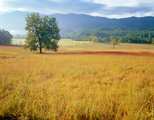 LAN 07 GR0050 01 © Kimball Stock Cades Cove During Summer In Great Smoky Mountains National Park