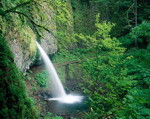 LAN 07 GR0087 01 © Kimball Stock Ponytail Falls During Spring At Columbia River Gorge National Scenic Area, Oregon