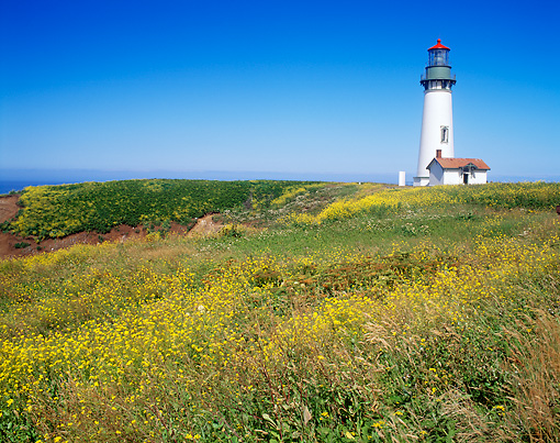 LAN 07 GR0119 01 © Kimball Stock Yaquina Head Lighthouse During Summer Near Newport, Oregon