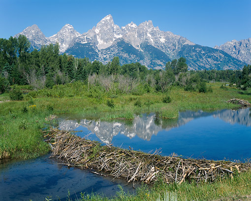 LAN 07 GR0137 01 © Kimball Stock Mountains And Beaver Dam, Grand Teton National Park, Wyoming