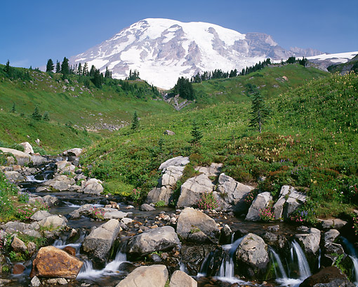 LAN 07 GR0149 01 © Kimball Stock Mount Rainier And Edith Creek, Mount Rainier National Park, Washington State