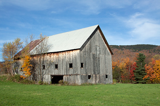 LAN 07 LS0014 01 © Kimball Stock Old Barn With Paper Birches And Sugar Maple Central Vermont