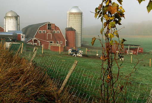 LAN 07 DB0001 01 © Kimball Stock Vermont Farm With Red Barn Silos Cows Green Fields Fence