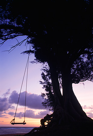 LAN 07 MR0010 01 © Kimball Stock Swing On Tree At Sunset North Shore Kauai, Hawaii