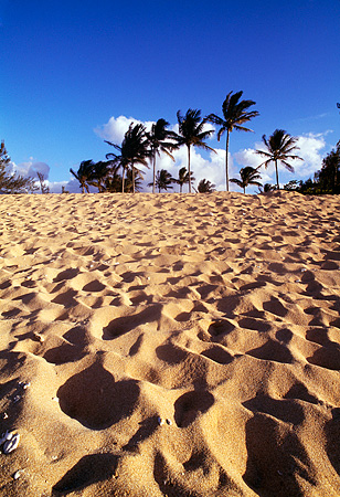 LAN 07 MR0013 01 © Kimball Stock Palm Trees On Beach North Shore Kauai, Hawaii