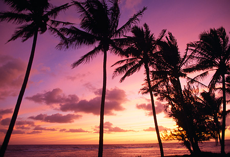 LAN 07 MR0014 01 © Kimball Stock Palm Trees On Beach At Sunset North Shore Kauai, Hawaii