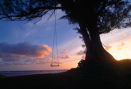 LAN 07 MR0016 01 © Kimball Stock Swing On Tree At Sunset North Shore Kauai, Hawaii