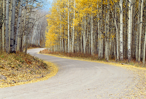 LAN 07 RF0209 01 © Kimball Stock Winding Road Through Gunnison National Forest Autumn Colorado