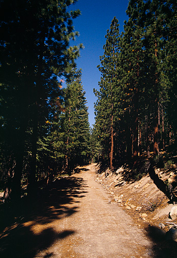 LAN 07 RK0095 01 © Kimball Stock Pathway With Tall Trees   Lake Tahoe, CA