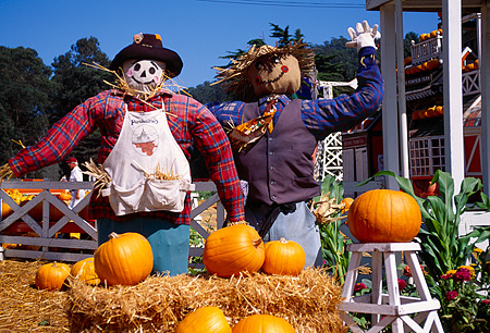 LAN 07 RK0142 16 © Kimball Stock Two Scarecrows With Pumpkins Half Moon Bay California