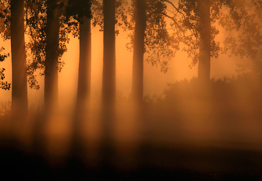 LAN 08 KH0010 01 © Kimball Stock Rising Sun Piercing Through Mist And Row Of Poplars In France