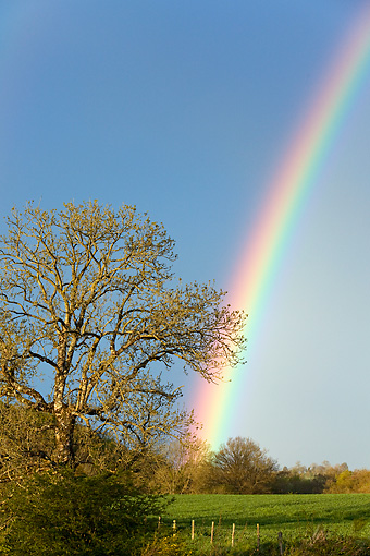 LAN 08 KH0011 01 © Kimball Stock Rainbow In Spring France
