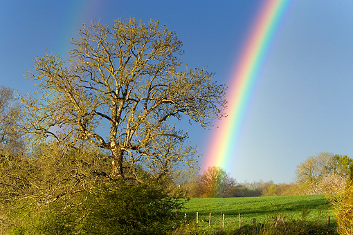 LAN 08 KH0012 01 © Kimball Stock Rainbow In Spring France