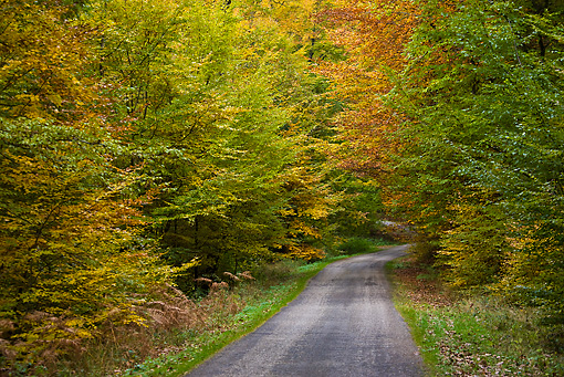 LAN 08 KH0034 01 © Kimball Stock Road In Hardwood Forest In Autumn France