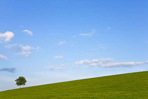 LAN 08 KH0069 01 © Kimball Stock Solitary Tree In Meadow Alsace, France