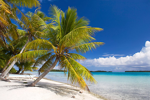 LAN 08 KH0077 01 © Kimball Stock Coconut Palms On White Sand Beach At Deserted Island In Polynesia
