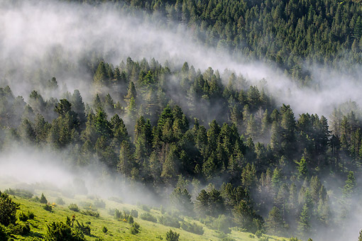 LAN 08 KH0092 01 © Kimball Stock View Of High Clouds Clinging To Forest At Plateau De Beille Ariege In Pyrenees, France