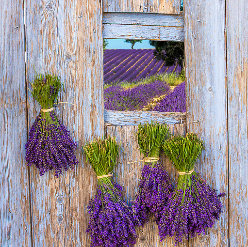 LAN 08 KH0114 01 © Kimball Stock Old Door And Lavender Flowers In Drome Provencale, France