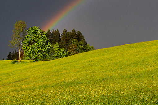 LAN 08 KH0136 01 © Kimball Stock Flowers And Grass On Hill In Meadow With Rainbow In Spring, Austria