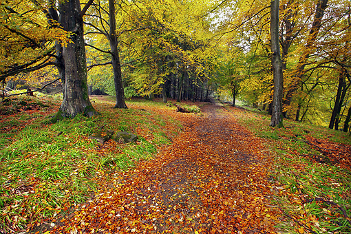LAN 08 MH0002 01 © Kimball Stock Scenic Pathway With Trees In Autumn Colors Scotland