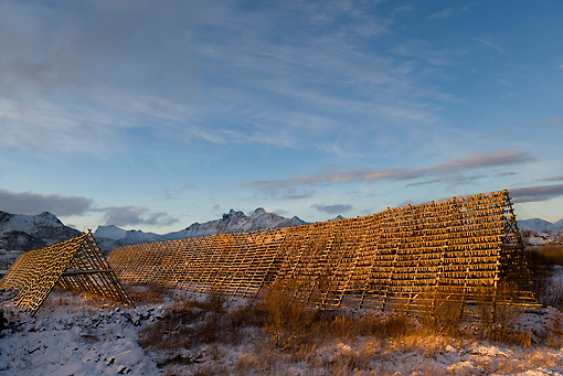 LAN 08 KH0006 01 © Kimball Stock Fish Drying On Racks In Norway