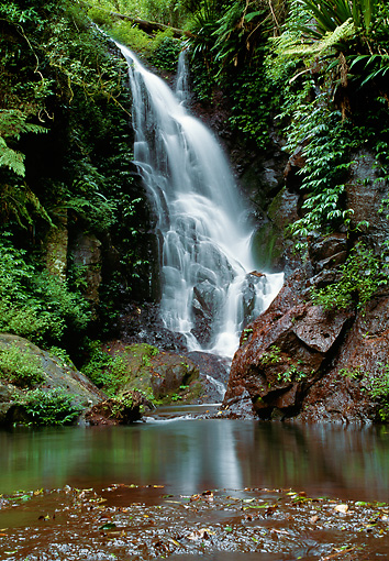 LAN 09 MH0007 01 © Kimball Stock Elabara Falls At Lamington National Park Queensland, Australia