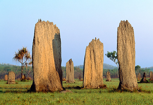 LAN 09 MH0008 01 © Kimball Stock Magnetic Termite Mounds In Australia