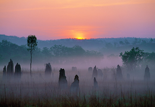 LAN 09 MH0012 01 © Kimball Stock Termite Mounds At Sunrise In Litchfield Park Australia