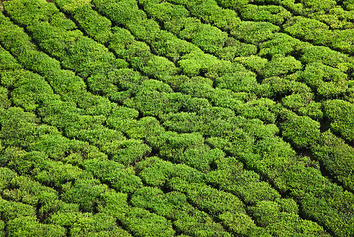 LAN 09 MH0015 01 © Kimball Stock Aerial View Of Tea Plantation In Munnar, Kerala, India