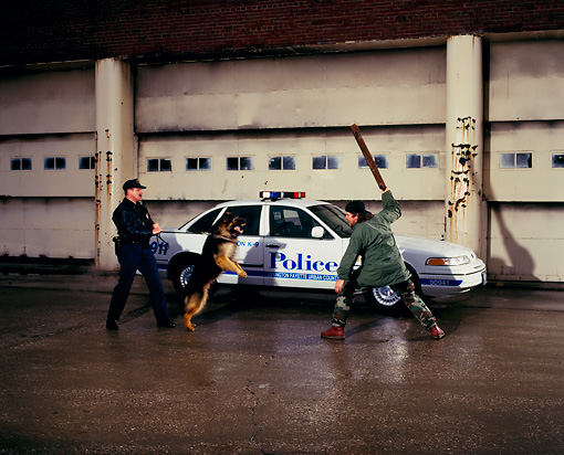 LAW 01 RK0019 01 © Kimball Stock Lexington Police With Dog And Thug By 1994 Ford Crown Victoria White By Building