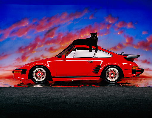 LEP 30 RK0092 03 © Kimball Stock Black Leopard Laying On Top Of Red Porsche By Sand Sunset Background