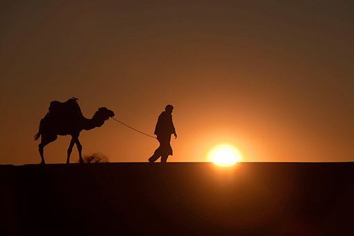 MAM 04 AC0001 01 © Kimball Stock Camel Caravan Walking At Sunset In Erg Chebbi Dunes, Morocco