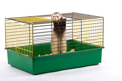 MAM 15 JE0001 01 © Kimball Stock Ferret In Cage Standing On Hind Legs On White Seamless