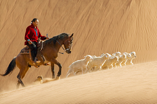 MAM 17 KH0008 01 © Kimball Stock Berger Horse And Dog Guiding Herd Of Dwarf Goats Through Sand Dunes