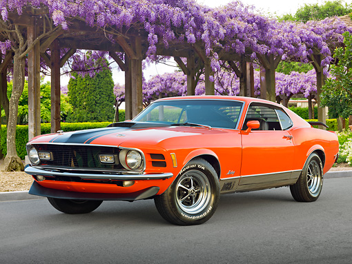 MST 01 RK1435 01 © Kimball Stock 1970 Ford Mustang Mach I Orange With Black Stripe 3/4 Front View On Pavement By Purple Flowers