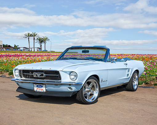 MST 01 RK1660 01 © Kimball Stock 1967 Ford Mustang Convertible Blue 3/4 Front View On Pavement By Flowers